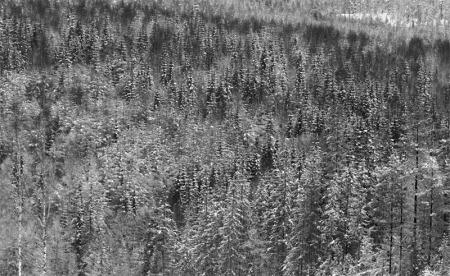 svartvitskog